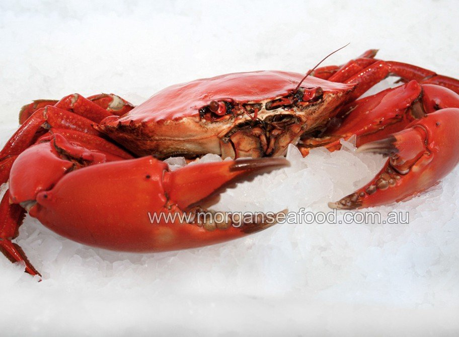 how to eat spanner crab